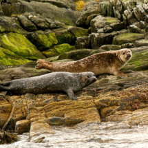 seals-in-the-fjord_